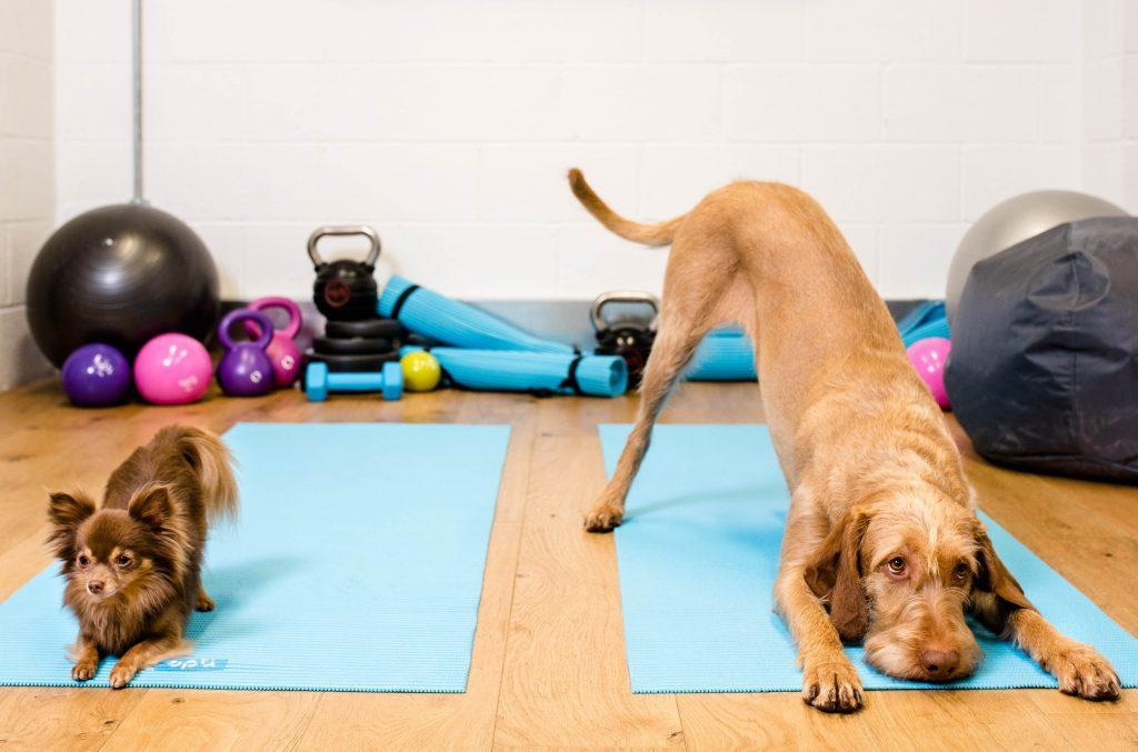 Pet-cercise, exercising with your pets.