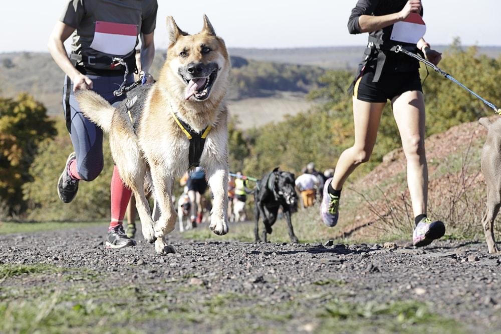 Canine-Run-Southsea-Portsmouth