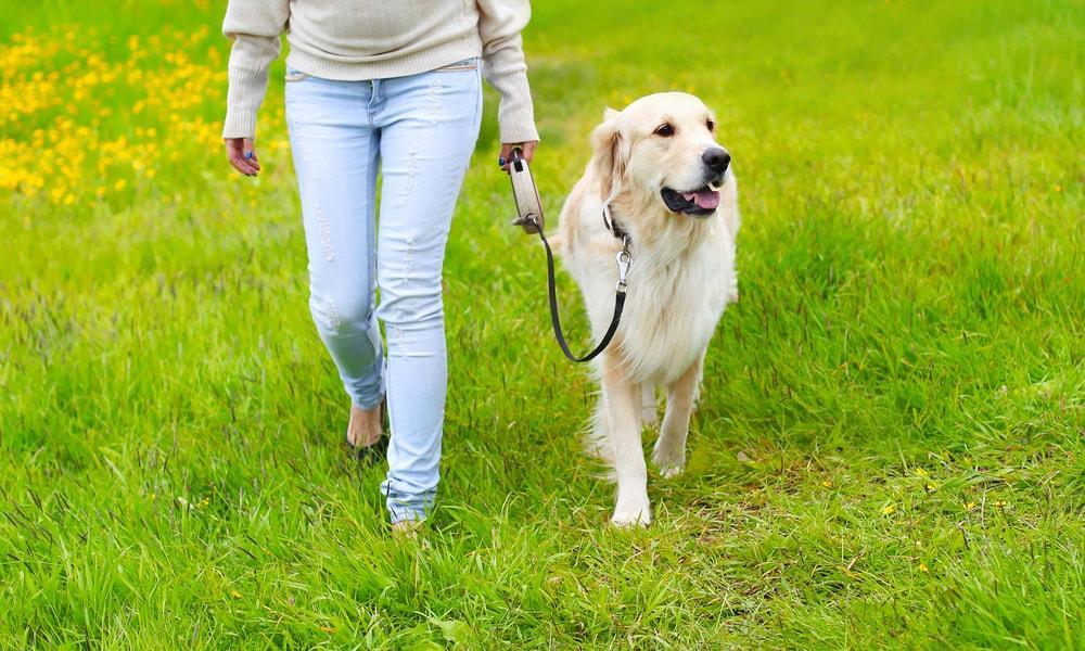 Simplyhealth-Canine-Run-Dog-Walk