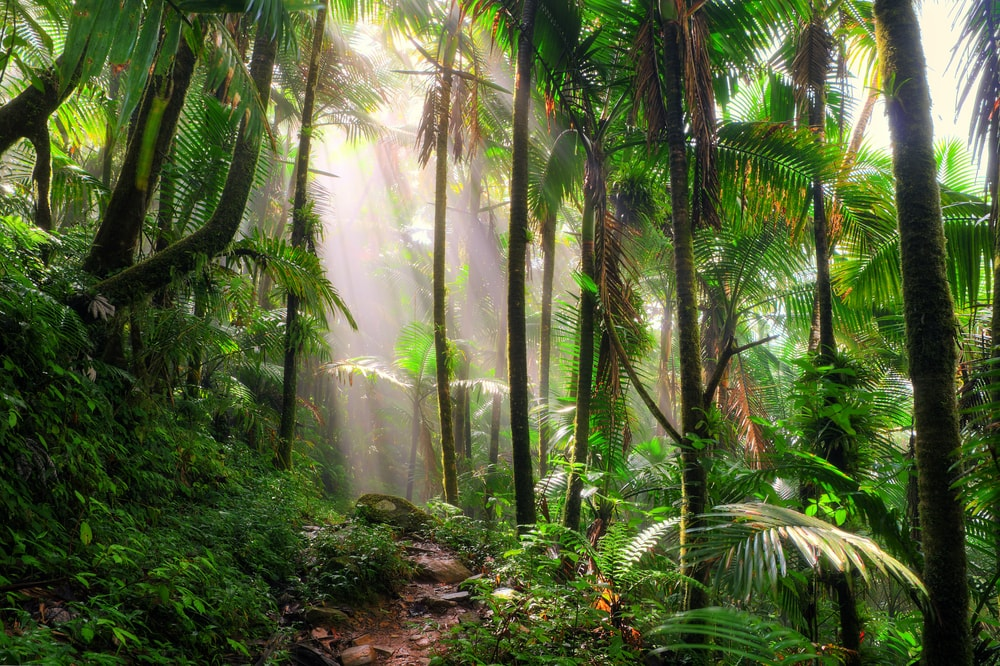 El-Yunque-National-Rainforest-Running